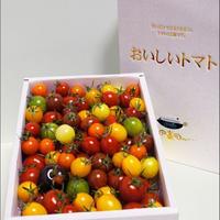 【贈答用】Coiinaトマト