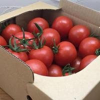 フルティカトマト 1kg ご家庭用