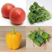 サラダ野菜セット(フルーツトマト/パプリカ/レタス/ベビーリーフ )