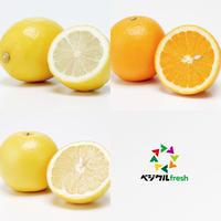 柑橘セット(レモン/グレープフルーツ/オレンジ)