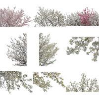 桜 切り抜き素材セット  - Cherry Blossoms   sa_003