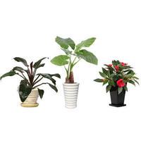 観葉植物素材 3個セット 8kp0013