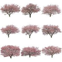 桜 切り抜き素材セット  - Cherry Blossoms   sa_020