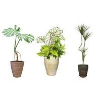 観葉植物素材 3個セット 8kp0012
