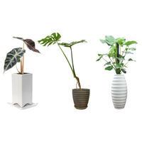 観葉植物素材 3個セット 8kp0004