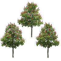 3本樹木(アイレベル) ベニバナトチノキ 23_003