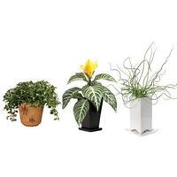 観葉植物素材 3個セット 8kp0011