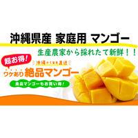 沖縄県産 ワケあり絶品マンゴー 1㎏※3個入目安 (送料込)