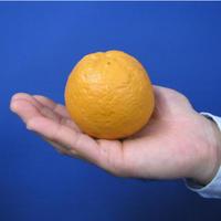 ラバーオレンジ