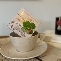 【四つ葉のクローバーⅠ】宇治紅茶館がセレクトした David tea collection