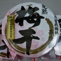 【完熟十郎】梅干し4.5kg(小田原曽我梅林産)