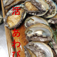 日本海産 活あわび/えぞあわび 500g