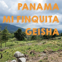 【SPECIALTY COFFEE】100g Panama Mi Finquita GEISHA 1.650m F. W. / パナマ ミ・フィンキータ農園 ゲイシャ種 F.W.
