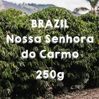【SPECIALTY COFFEE】250g Brazil Nossa Senhora do Carmo Yellow Honey  / ブラジル ノッサ・セニョーラ・ド・カルモ  イエローハニー