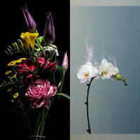 【花束+音楽DLコード+CD】Close to you + LAST WALTZ[CD] / world's end girlfriend & arbluem【C】