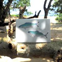 ポストカード5枚セット「黒潮魚の譜 A」
