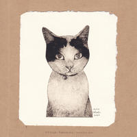 坂本千明 紙版画「猫11」*シート