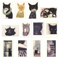 坂本千明 ポストカード(猫)12枚組
