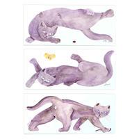 水沢そら ポストカード(猫3匹)