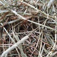 北海道産無農薬チモシー 令和元年度産 一番刈り (2kg)【送料無料】