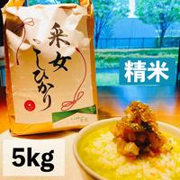 【宅配精米5kg】令和3年  采女コシヒカリ5kg 精米済