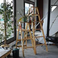 """michigan ladder, Wood Stepladder """"size 6"""" (送料込み・メーカー直送品)"""