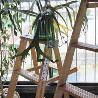 """michigan ladder, Wood Stepladder """"Size 4"""" (送料込み・メーカー直送品)"""