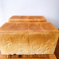 【5月お届け分】初音食パン プレーン2本セット