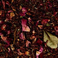 〈10g茶葉〉レッドサハラ