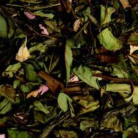 〈10g茶葉〉ホワイトフジヤマ