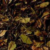 〈10g茶葉〉フーチエン バイムダン