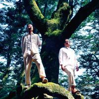 『見上げるほどの大木に』