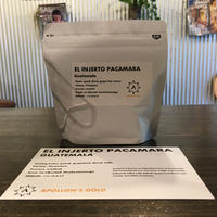 El  Injerto Pacamara Guatemala