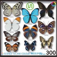 STC 鱗翅学者の私的標本アクリルマスコット