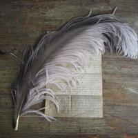 plume  L  grise
