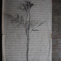 une fleur -sokei  -