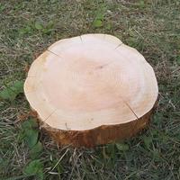 薪割り台 切り株 ひのき 丸太 約30x30cm 厚さ約10cm