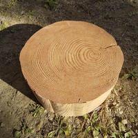刳り抜き丸太 薪割り台 切り株 杉 約30x30cm 厚さ約12cm