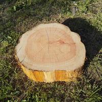 薪割り台 切り株 ひのき 丸太 約31x31cm 厚さ約10cm
