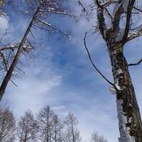 冬の青空。林から。その2