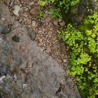 ドローン空撮-林の中の小川(FHD)-その2