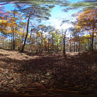 VR素材-秋の林の中3カラーセットno.1