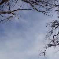冬の青空。林から。その1