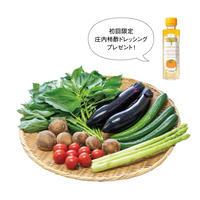 【iino】食の都庄内「野菜セット」※庄内柿酢ドレッシングプレゼント中!(9/30まで)
