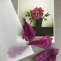 季節の葉書 牡丹封筒付き 限定品
