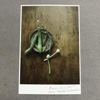 季節の葉書 胡瓜と隠元豆