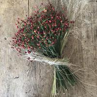赤い果実を草のリボンで束ねて お庭の姫林檎と季節の葉書セット
