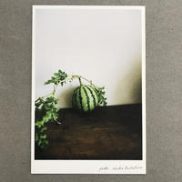 季節の葉書 西瓜