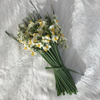 花と果実便 立春 はじまりは水仙の香りと