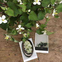 花と果実便 小満